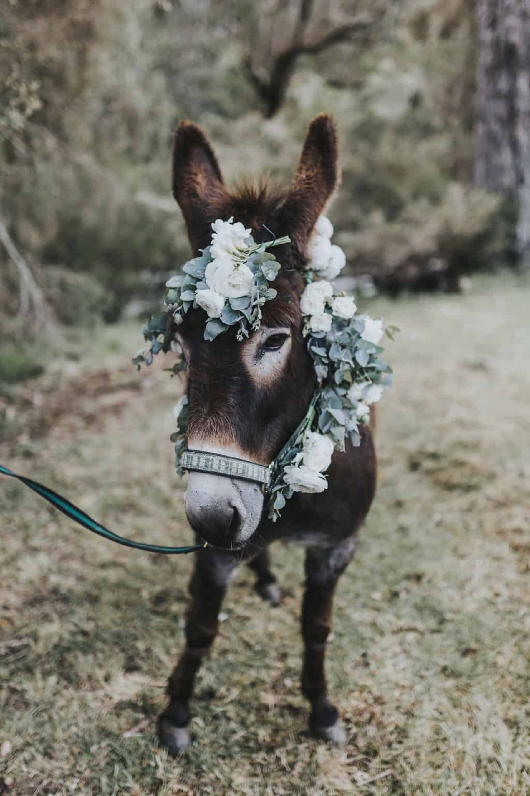 cute donkey with flower crown
